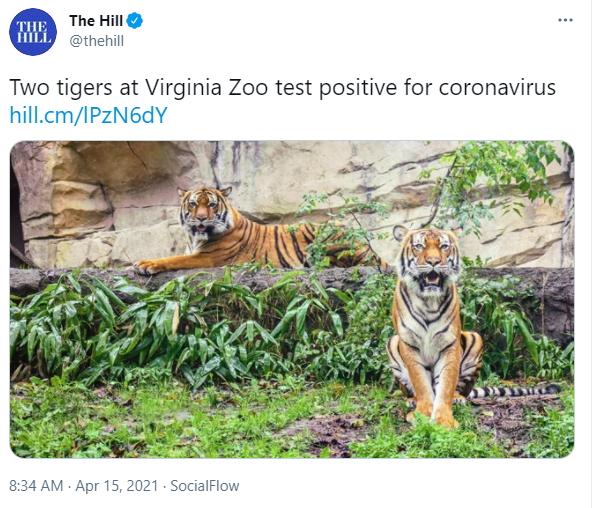 Virginia Zoo - lions coronavirus.jpg